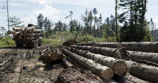 Прокуратура розповіла про масштабні порушення на території кількох лісництв