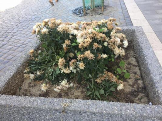 Мешканці та гості Ужгорода обурені тим, що сталося на святкуванні Днів міста