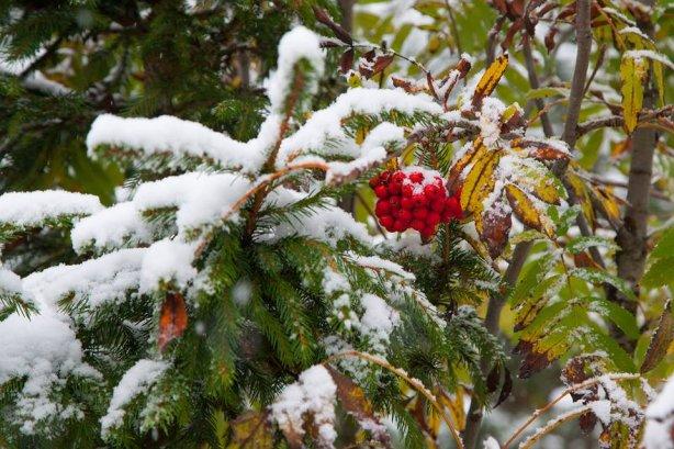 На цей тиждень синоптики прогнозують перші осінні заморозки та мокрий сніг у горах