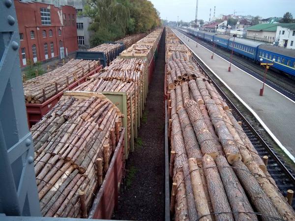 Україна може скасувати мораторій на експорт лісу-кругляка