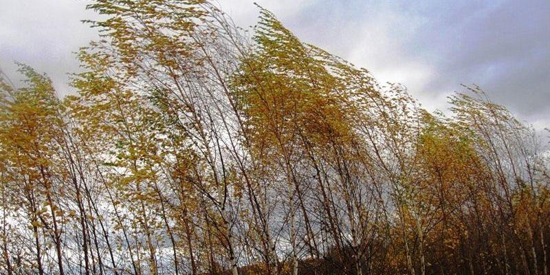 Синоптики попереджають про пориви вітру