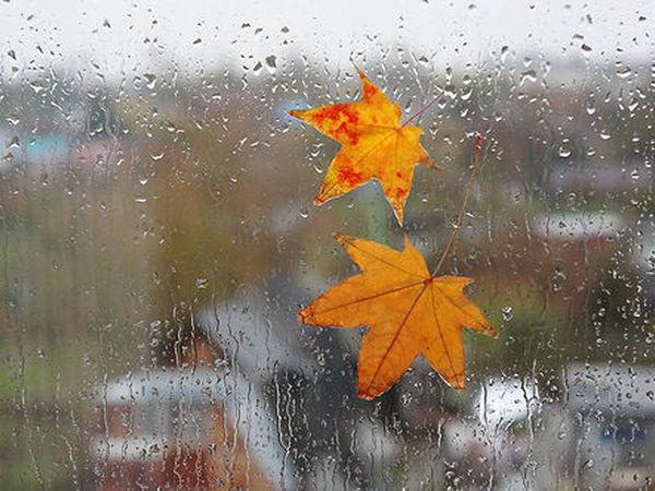 На закарпатців чекає дощовий тиждень