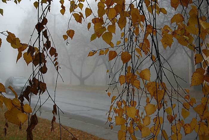 Синоптики попереджають про значні дощі та пориви вітру