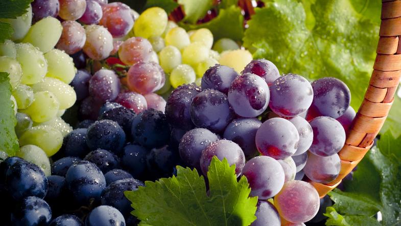На Мукачівщині відбувся фестиваль молодого вина