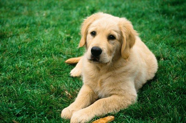 В Ужгороді облаштують станції для вигулу собак