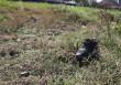 Удар був такої сили, що з дитини злетіло взуття: подробиці жахливої трагедії