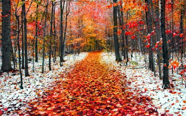 Сонце, дощ і сніг будуть змінювати один одного майже весь місяць: озвучено прогноз погоди на листопад