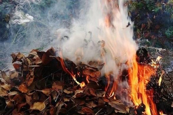 Закарпатці розповіли, що думають про спалювання листя