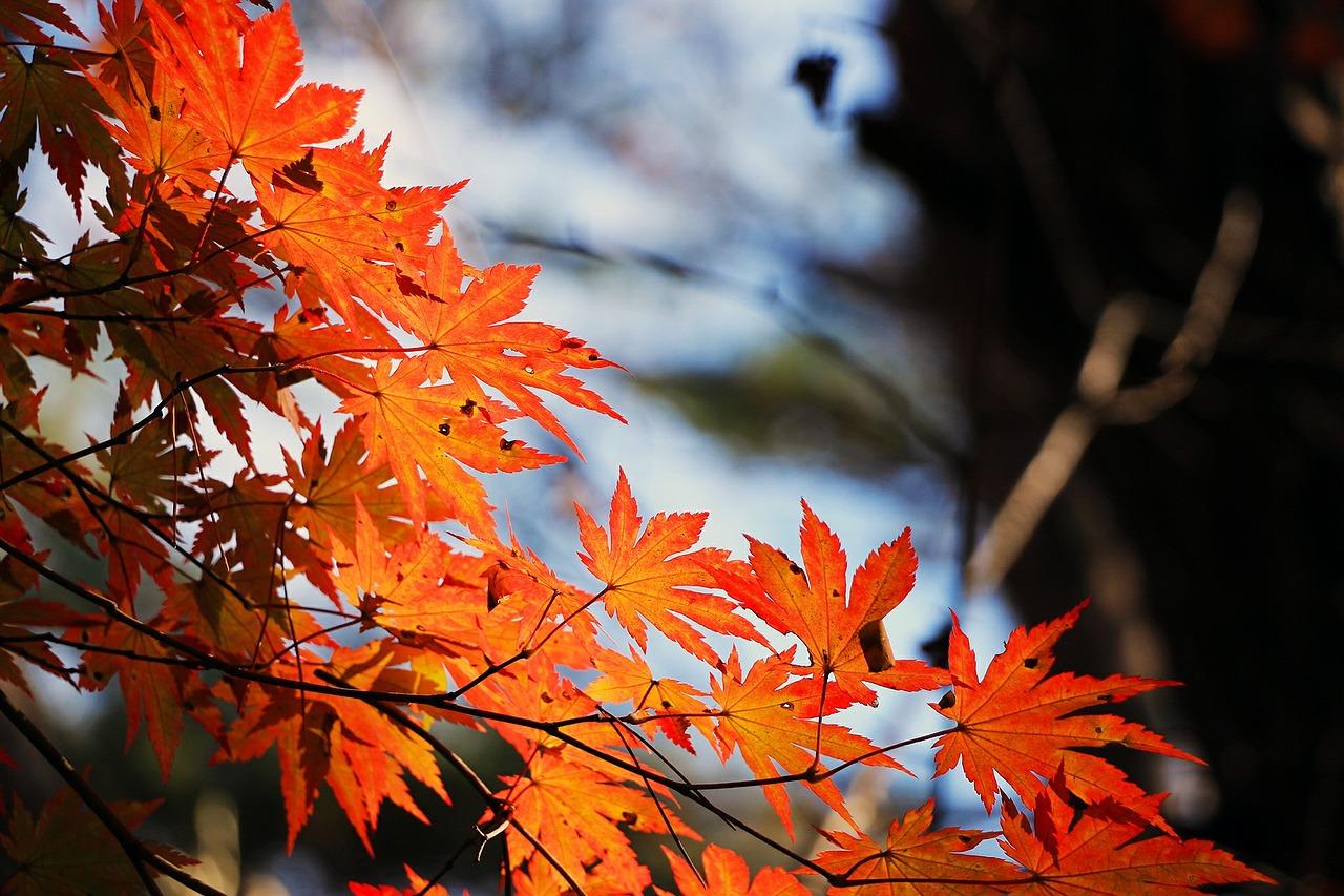 Якою буде погода в останні дні жовтня: синоптики дали прогноз