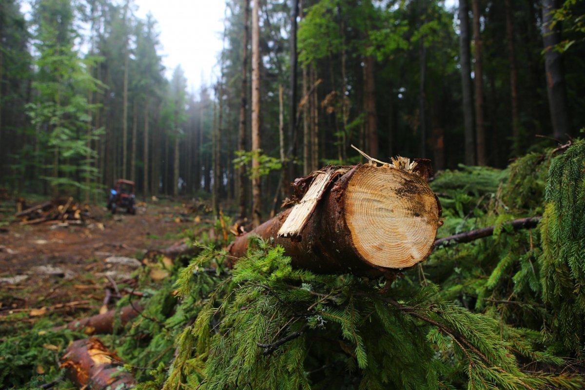 Депутати заборонили суцільні вирубки лісу на схилах Карпатах