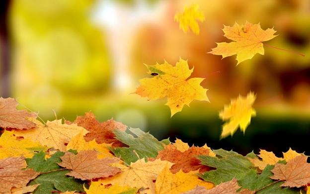 Вихідні у листопаді: скільки відпочиватимемо цього місяця