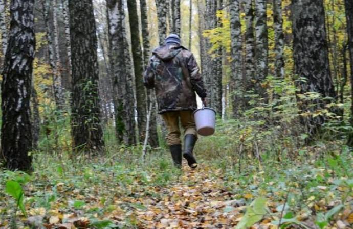 На Ужгородщині молодий чоловік пішов по гриби і зник