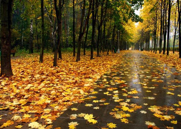 Синоптики розповіли, якою буде погода у перший тиждень листопада