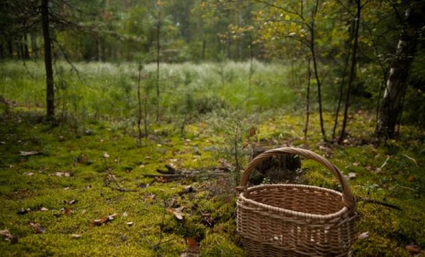 Трагедія у лісі: хлопець пішов із друзями по гриби і помер