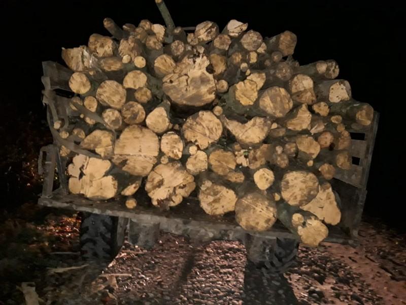 На Великоберезнянщині затримали вантажівку з незаконно вирубаною деревиною