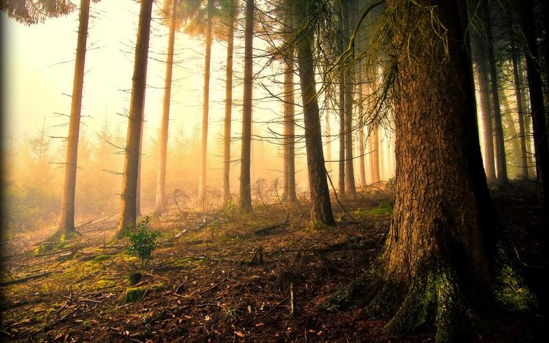 У лісах Рахівщини травмувався чоловік
