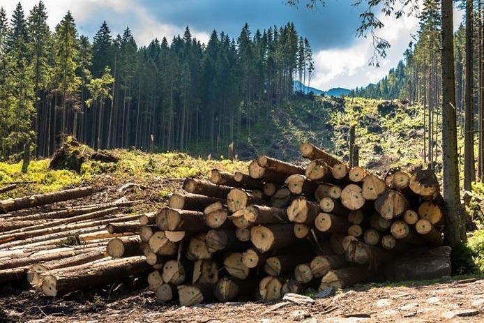 Перевірити законність вирубки лісу на Закарпатті тепер можна онлайн