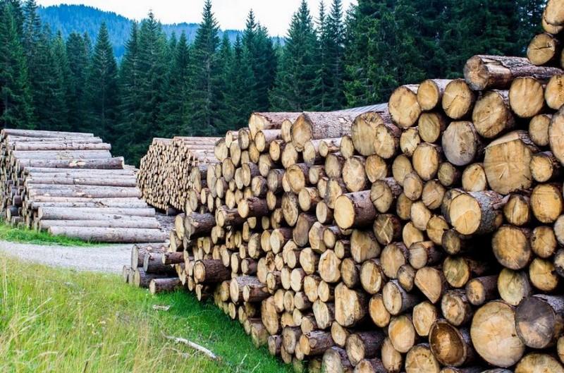 СБУ викрила схему злочинного експорту деревини із Закарпаття
