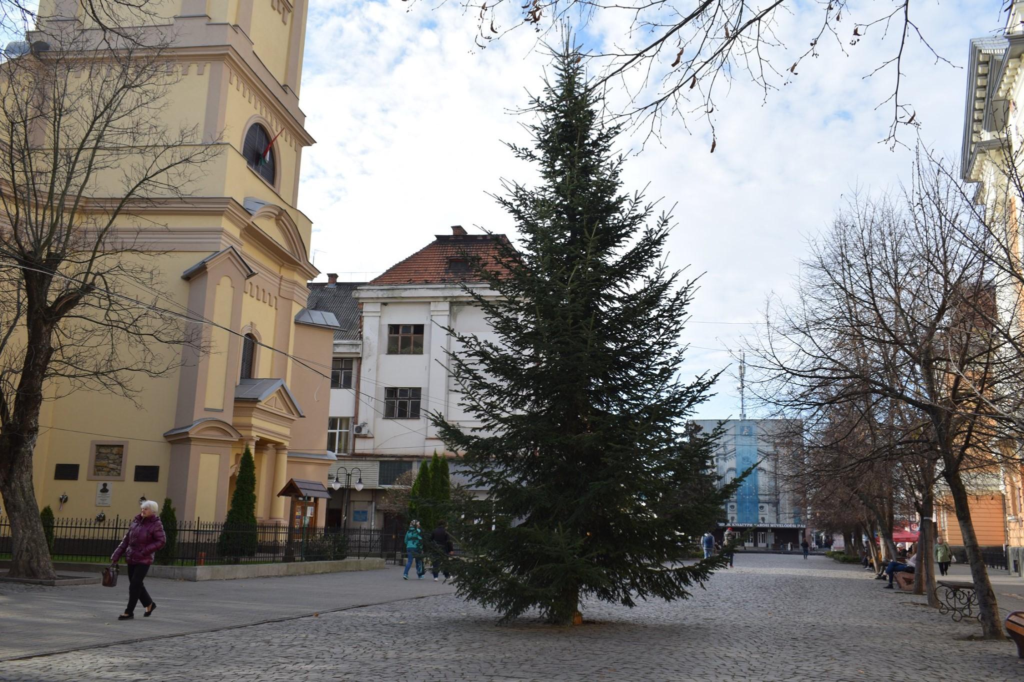 На центральній площі Берегова встановили головну новорічну ялинку міста