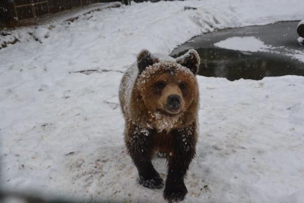 Соцмережі підкорюють фото ведмедів з Синевиру