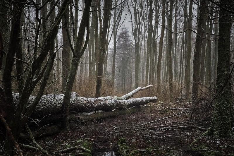 Молодого чоловіка зі Львова Юрія Бордуна, якого розшукували кілька тижнів, знайшли мертвим у лісі на Закарпатті