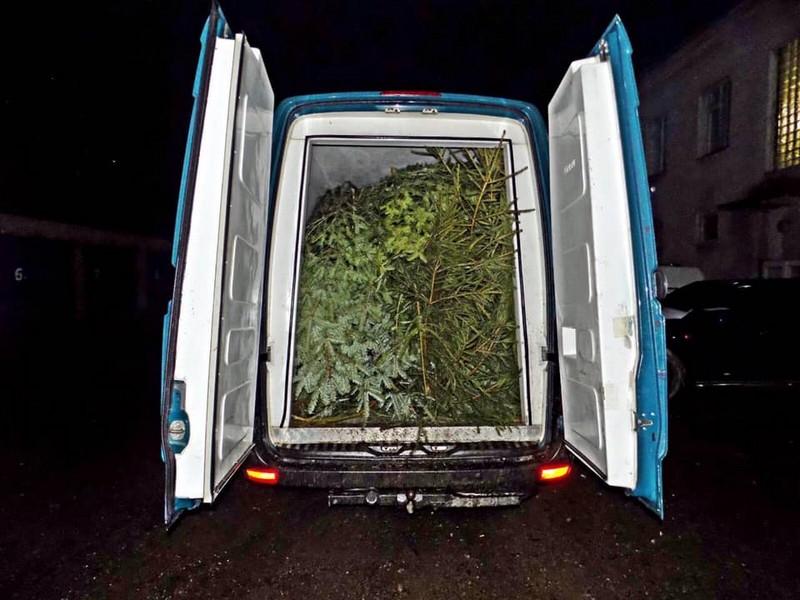 Поліцейські зафіксували випадки незаконного перевезення близько 200 ялинок
