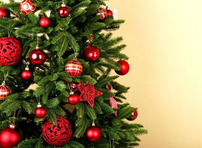 В Ужгороді кілька років діє програма переробки новорічних ялинок