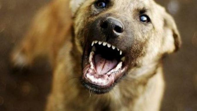 У Мукачеві в мікрорайоні ДОСи собака напав на хлопчика, – соцмережі