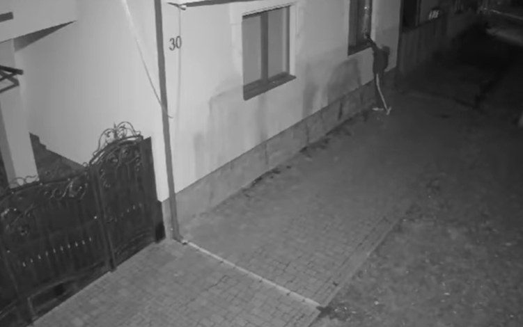 Винагорода у розмірі 5 тисяч доларів: у Мукачеві розшукують палія