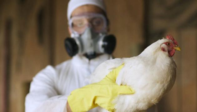 Небезпека пташиного грипу: у Мукачівській ОТГ перевірятимуть птахогосподарства і робитимуть подвірні обходи