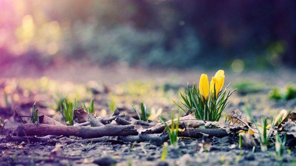 Скільки відпочиватимуть українці у перший місяць весни