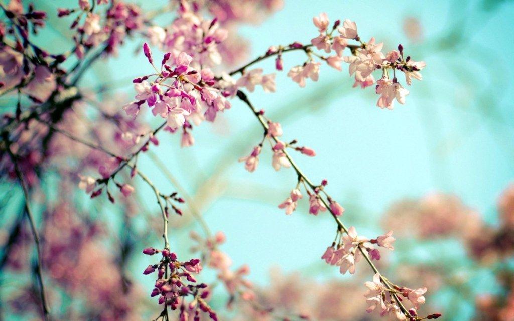 Погода на березень 2020 року: коли весною відчутно потепліє