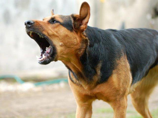 Напади собак — що робити аби уникнути?