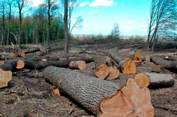 Прокуратура відреагувала на повідомлення ЗМІ про незаконну вирубку лісу