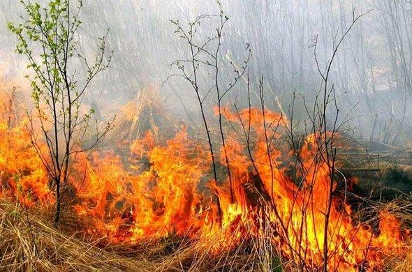 За добу в області сталося 5 пожеж в екосистемах
