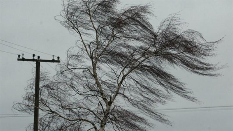 Закарпатців попереджають про сильний вітер і заморозки