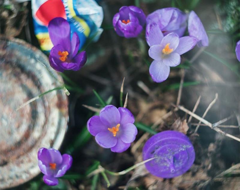 Квіти потопають у смітті: мережу шокували фото природи на Закарпатті