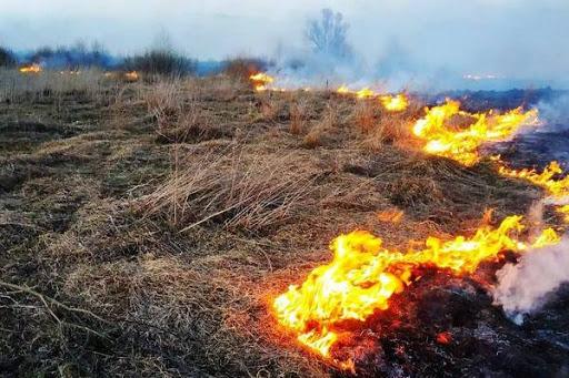 Кабмін закликав Раду збільшити штрафи за підпал трави