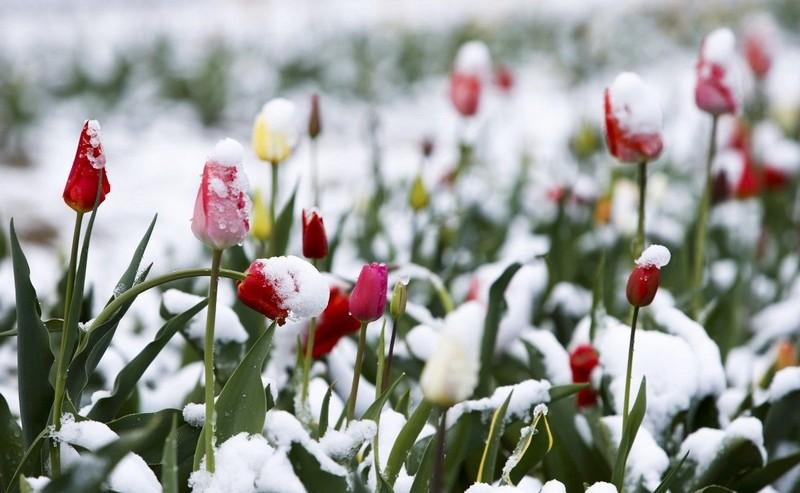 В кількох районах області синоптики прогнозують мокрий сніг та сніг