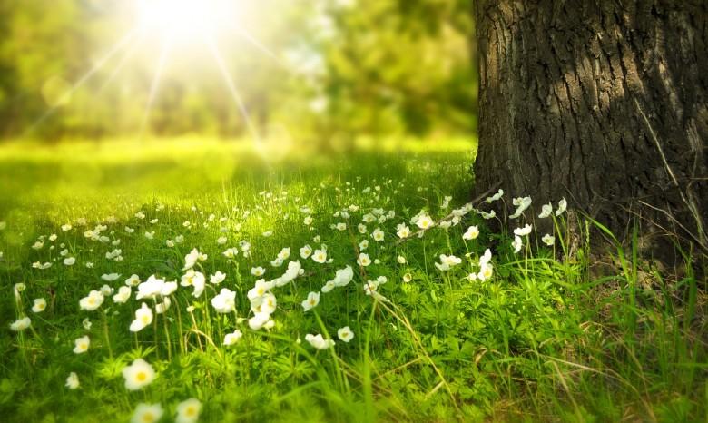 Погода на травень 2020: синоптики обіцяють посуху