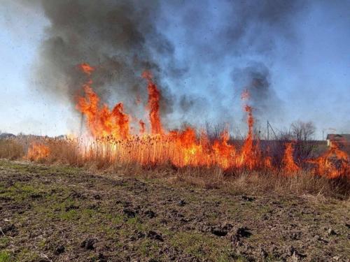 На Ужгородщині згоріло майже 3 Га сухої трави