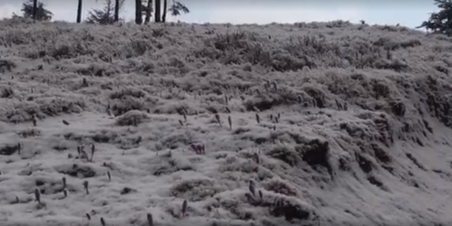 У Карпатах несподівано випав сніг