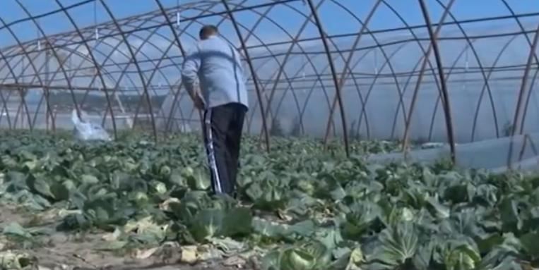 Закарпатські фермери втрачають гроші через карантин