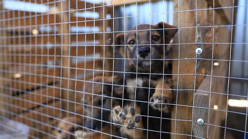 Пухнаста історія: як ужгородські волонтери допомагають безпритульним тваринам