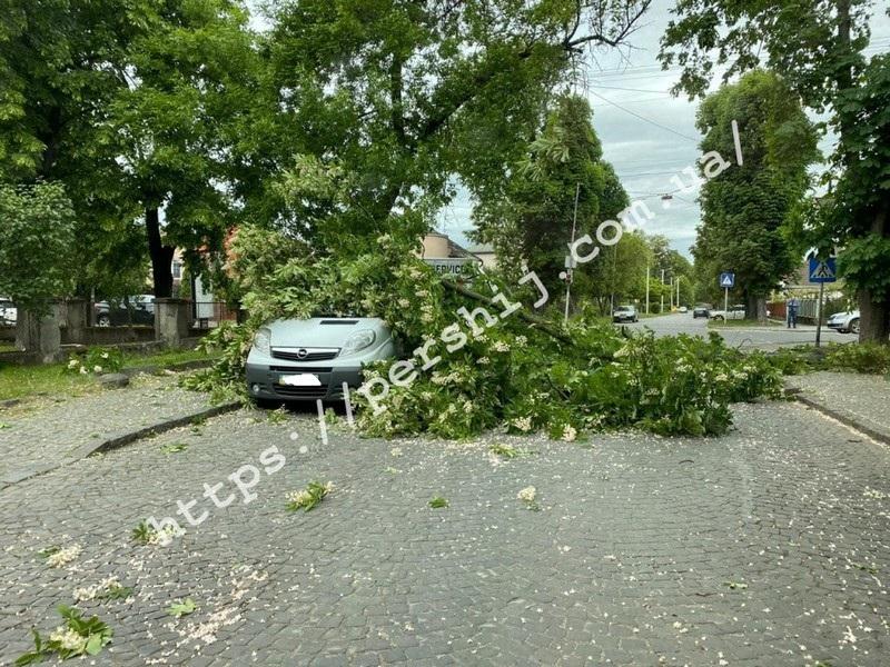В Ужгороді через сильний вітер дерево впало на машину