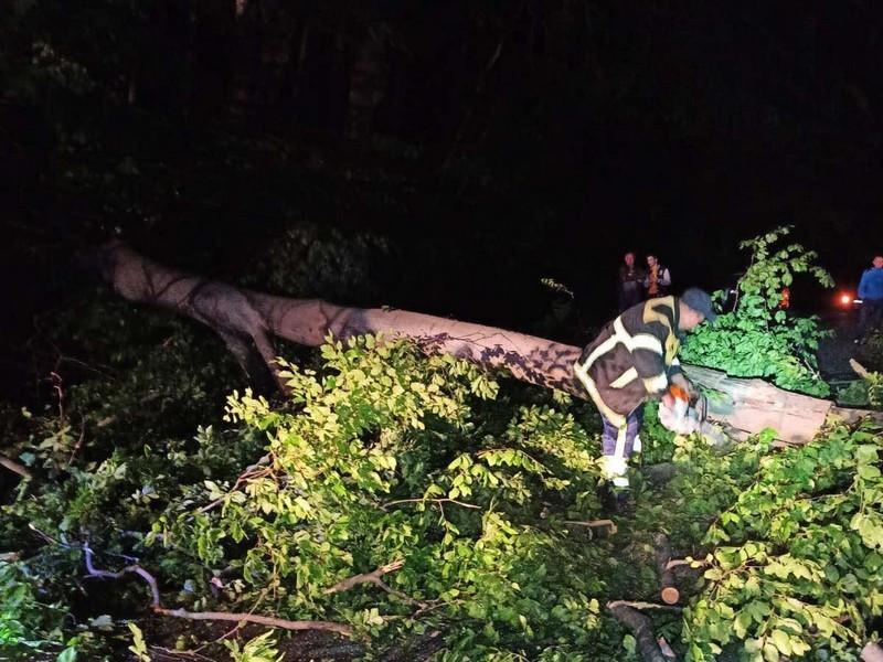 На Ужгородщині дерево впало на проїжджу частину дороги
