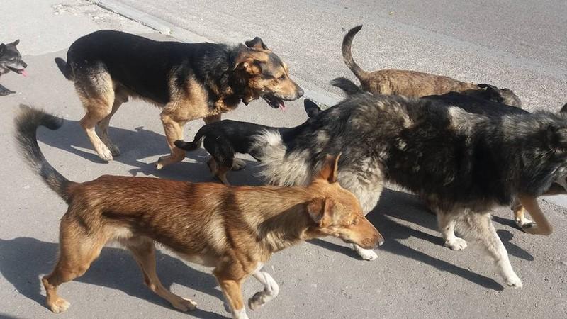 Зграя собак напала на вагітну жінку і двох її дітей