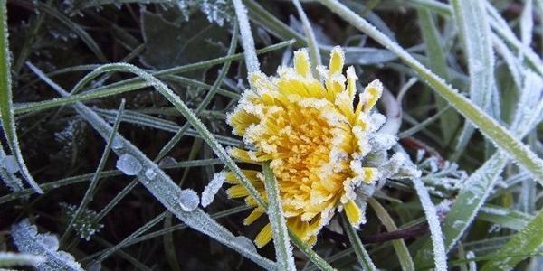 Синоптики попереджають про заморозки у найближчі дні