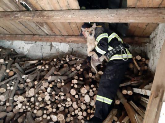 Пожежники врятували собаку, яка три дні просиділа на горищі