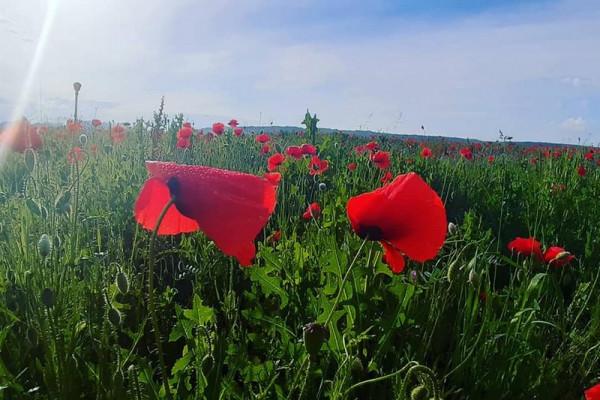 У Мукачеві з'явилася неймовірна локація для фото